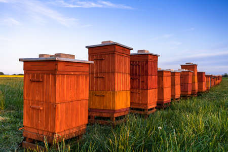 Wooden Beehives in Meadow. Organic Honey. Beekeeping and Apiculture.