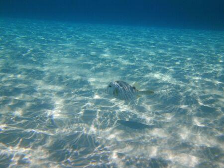 fish swimming in caribbean sea 版權商用圖片