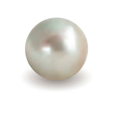 pearl shell: Isolated white pearl