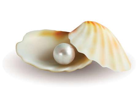 perlas: Pearl en shell