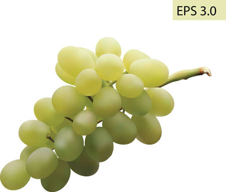 vitis: Grapes