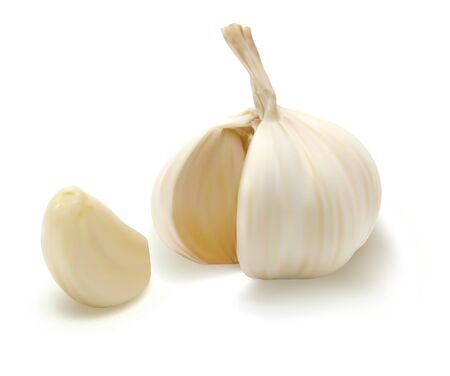 Realistic vector garlic. Isolated on white background.