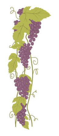 Bunch of Grapes. Design element Illustration