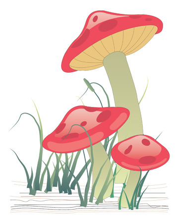 Three mushrooms on green grass. Vector illustration Illustration