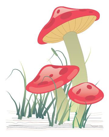 a toadstool: Three mushrooms on green grass. Vector illustration Illustration