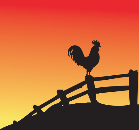Rooster silhouette on fence at sunset