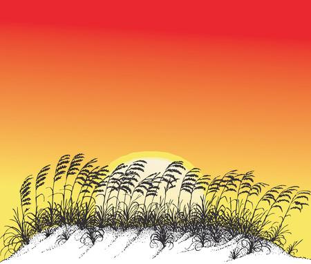 Vector illustration of sunset on the beach