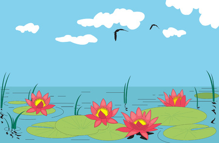 aquatic plants: Beautiful water lilly. Vector illustration Illustration