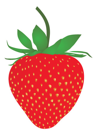 Strawberry isolated on a white background. Vector ilustration Illustration