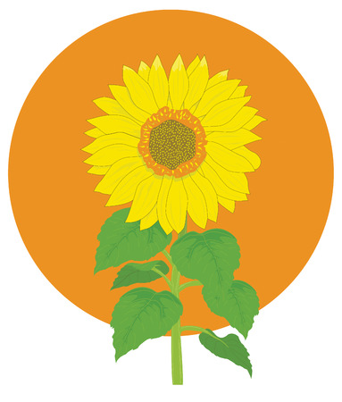 Vector illustration of sunflower Stock Vector - 8360903