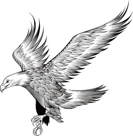 silhouette aquila: Aquila  Vettoriali