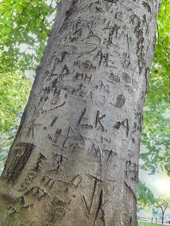 Symbols, letters, initials marked on the trunk of a tree in a public park