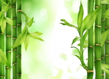 a serene life: Fresh beautiful Bamboo Border isolated on white background Stock Photo