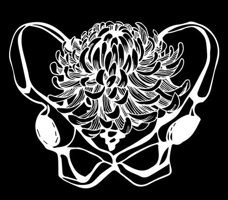 humerus: Background with hand draw human pelvis. Illustration Illustration