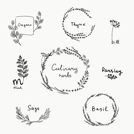 Handgezeichnete Reihe von Küchenkraut. Basilikum und Minze, Rosmarin und Salbei, Thymian und Petersilie. Logoelemente des Lebensmitteldesigns Logo