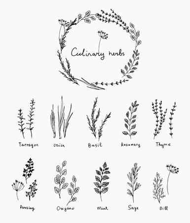 Handgezeichnete Reihe von Küchenkraut. Basilikum und Minze, Rosmarin und Salbei, Thymian und Petersilie. Logoelemente des Lebensmitteldesigns