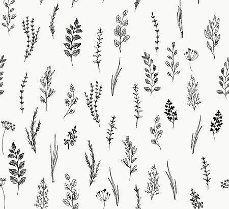 Hand drawn seamless pattern of culinary herb. Hand drawn set of culinary herb. Basil and mint, rosemary and sage, thyme and parsley. Food design logo elements