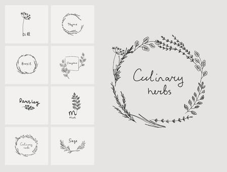 Ręcznie rysowane zestaw ziół kulinarnych. Bazylia i mięta, rozmaryn i szałwia, tymianek i pietruszka. Elementy logo projektowania żywności