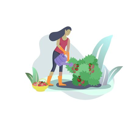 Harvesting and gardening people, woman doing farming and garden job, watering tomatoes, planting, growing. Reaping crop concept
