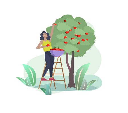 Harvesting and gardening people woman doing farming and garden job, planting, lay ripe apple from tree to box. Reaping crop concept