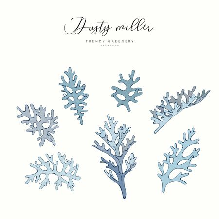 Dusty miller branch. Hand drawn wedding herb, plant elegant leaves for invitation save the date card design. Botanical rustic trendy greenery vector illustration