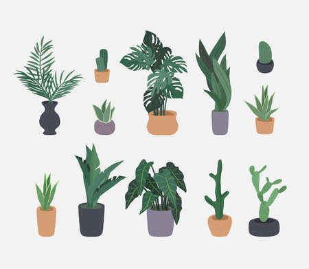 Potted plants collection. Homeplants, cactus, ficus and tropical leaves. Vector illustration