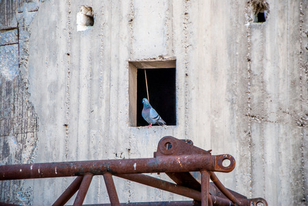abandon: abandon factory-pigeon