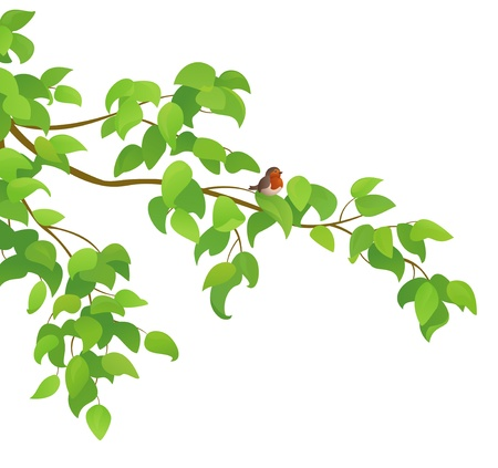 Vector illustration of a green tree branch with a bird  Illustration