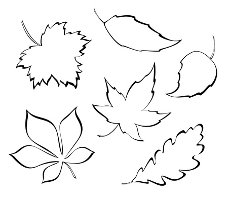 Vector leaves - design elements  Stock Vector - 20007681