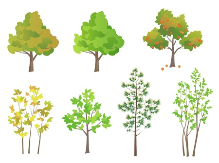 coniferous tree: Vector trees - design elements