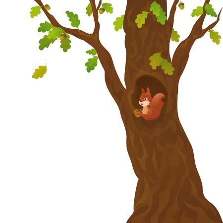 Vector illustration of a curious squirrel in the oak, isolated on white