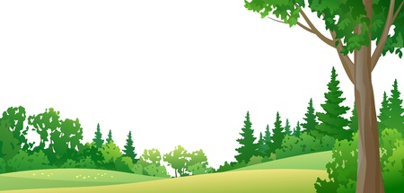 Vector illustration of a summer forest, on white background Stock Vector - 20242641