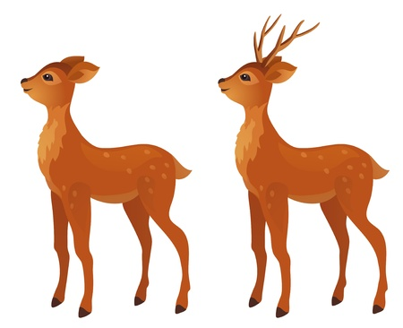 Vector cartoon young deer, isolated on white.