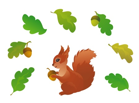 squirrel isolated: Vector conjunto de hojas de roble y una ardilla, aislado en blanco