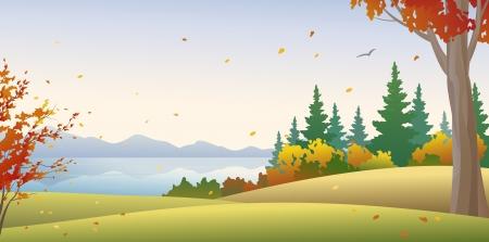 non    urban scene: Vector illustration of an autumn forest Illustration