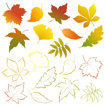 maple leaf icon: Vector autumn falling leaves - design elements