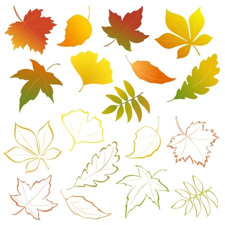 foglie di quercia: Vector autunno cadono le foglie - elementi di design