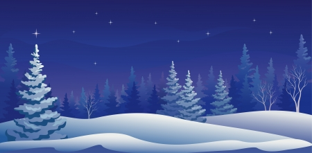 evergreen: Vector illustration of a beautiful winter night forest