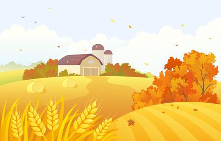 cosecha de trigo: ilustración de una escena de la granja del otoño con los campos de trigo y graneros