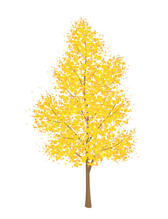 tall tree: Vector illustration of a yellow autumn tree, isolated on a white background Illustration