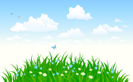 summer sky: background with a summer sky and grass
