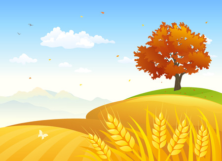Vector illustration of a beautiful autumn scenery with golden wheat fields