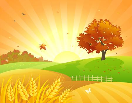 Vector illustratie van een mooi herfsttarwe veld en rode bladeren boom