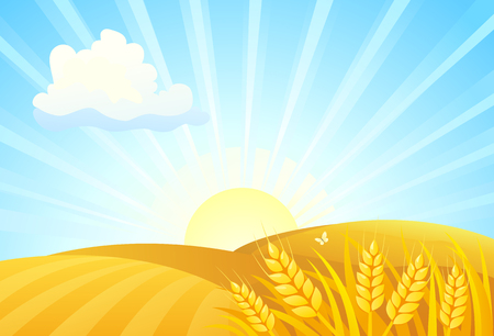 Vector cartoon illustration of autumn wheat fields, sunrise landscape