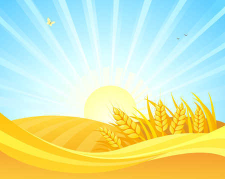 Wektor kreskówka rysunek pól pszenicy na tle wschodu słońca