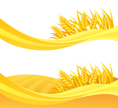 Vector illustration of wheat fields design, isolated on a white background