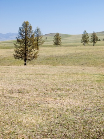 Spring mongolian steppe with few trees Stock Photo - 11506643