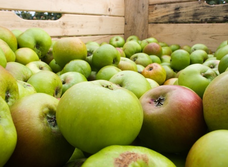 Wooden bin with freshly picked apples