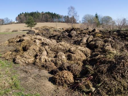 fecal: Big heap of organic cattle dung Stock Photo