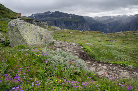 Landscape with mountain trail and summer flowers in Hardangervidda National Park, Norway, Scandinavia Stock Photo